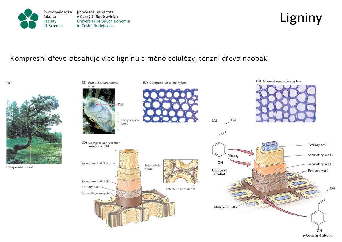 Ligniny Kompresní dřevo obsahuje více ligninu a méně celulózy, tenzní dřevo naopak