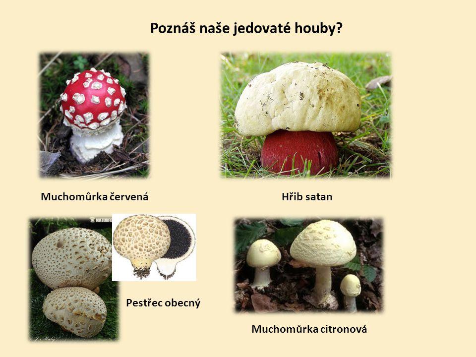 Poznáš naše jedovaté houby