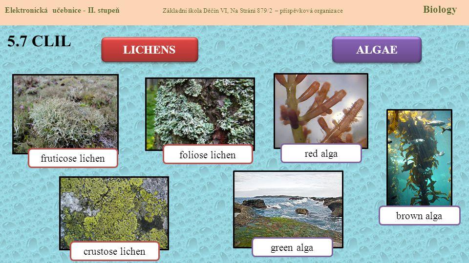 5.7 CLIL LICHENS ALGAE foliose lichen red alga fruticose lichen