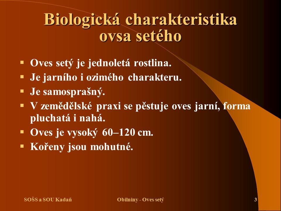 Biologická charakteristika ovsa setého