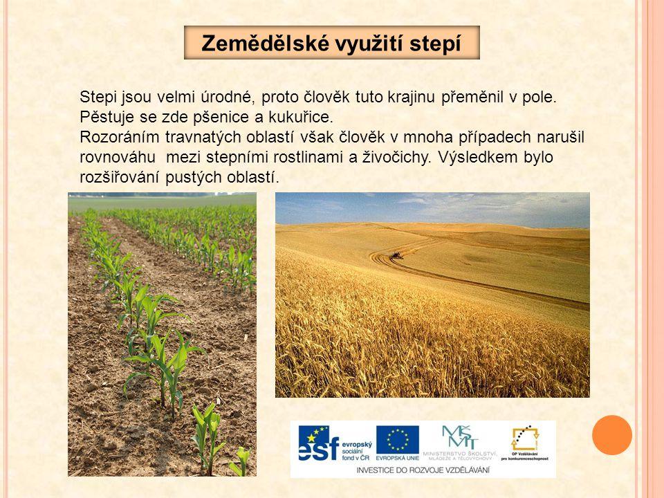 Zemědělské využití stepí