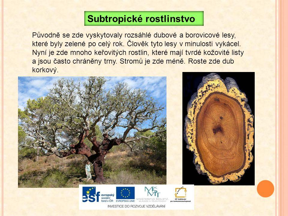 Subtropické rostlinstvo