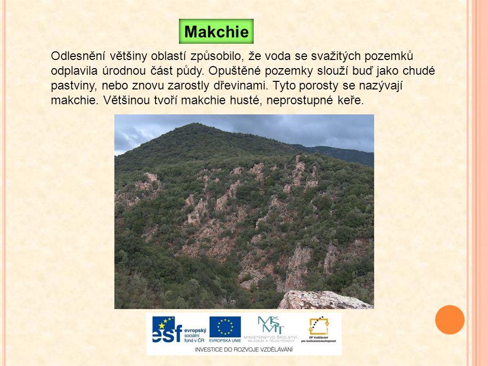 Makchie