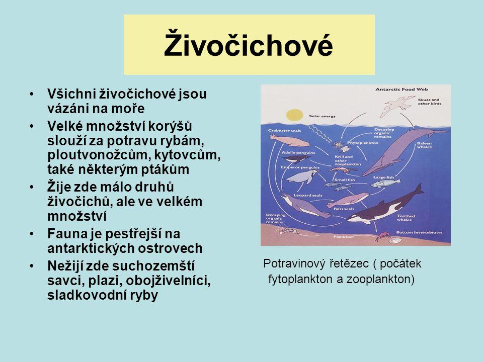Živočichové Potravinový řetězec ( počátek fytoplankton a zooplankton)