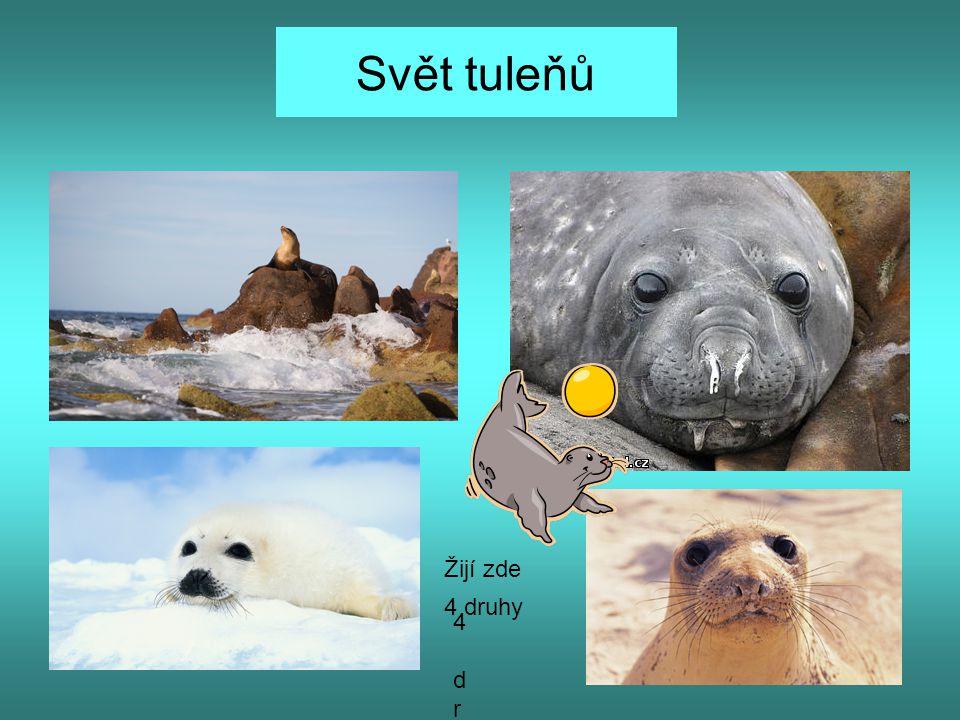 Svět tuleňů Žijí zde 4 druhy 4 druhy
