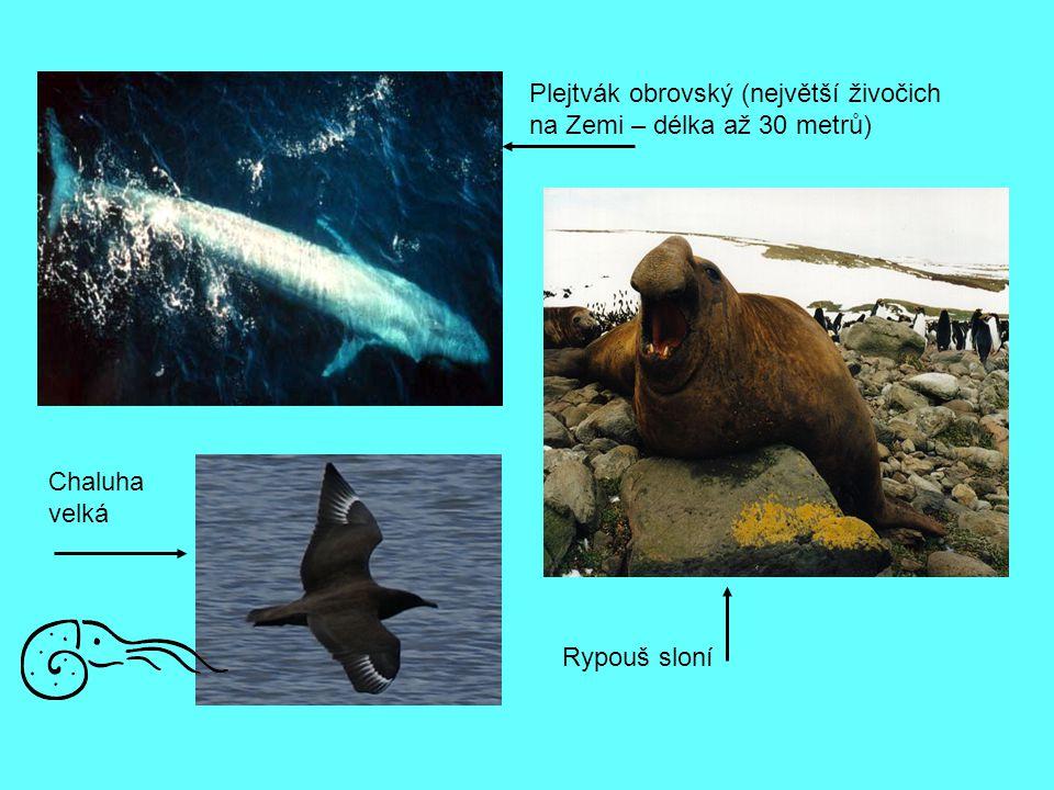 Plejtvák obrovský (největší živočich na Zemi – délka až 30 metrů)