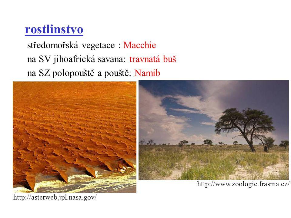 rostlinstvo středomořská vegetace : Macchie