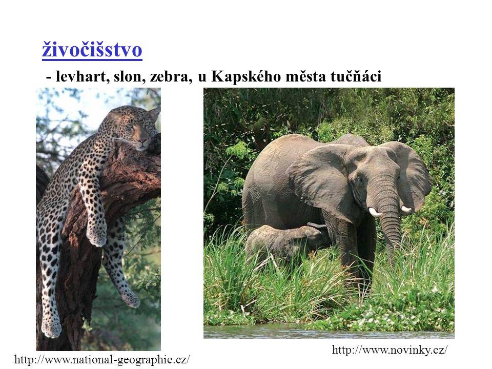 živočišstvo - levhart, slon, zebra, u Kapského města tučňáci