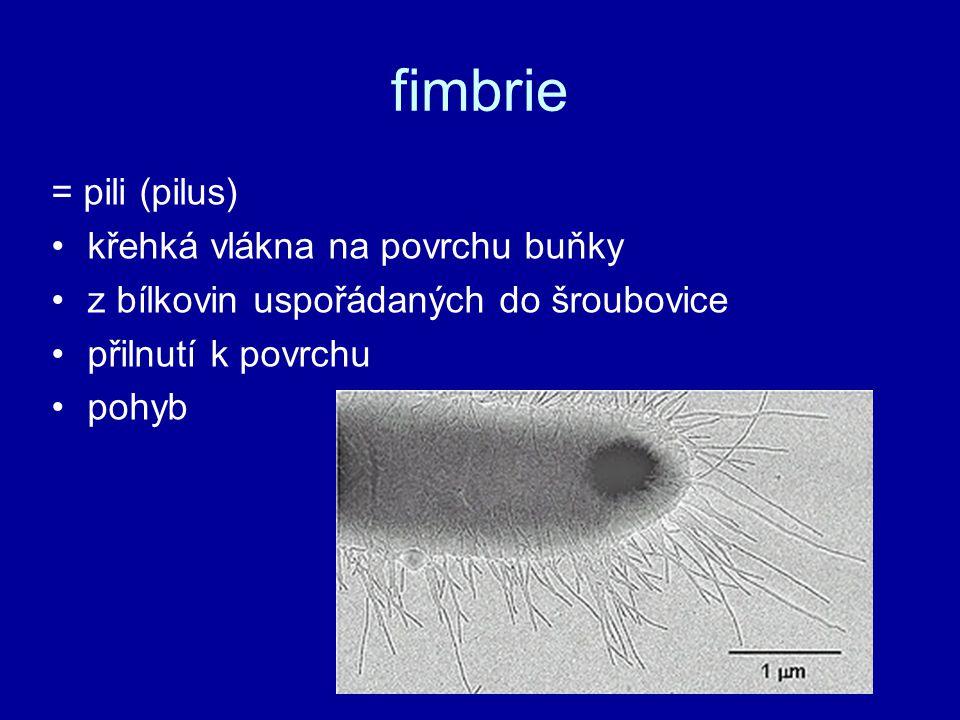 fimbrie = pili (pilus) křehká vlákna na povrchu buňky