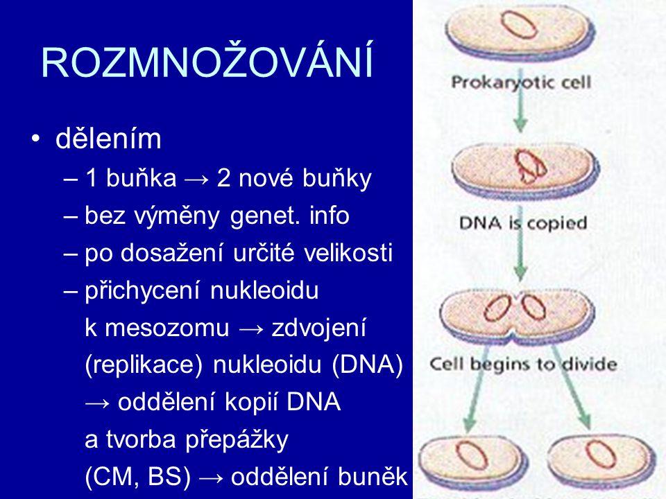 ROZMNOŽOVÁNÍ dělením 1 buňka → 2 nové buňky bez výměny genet. info