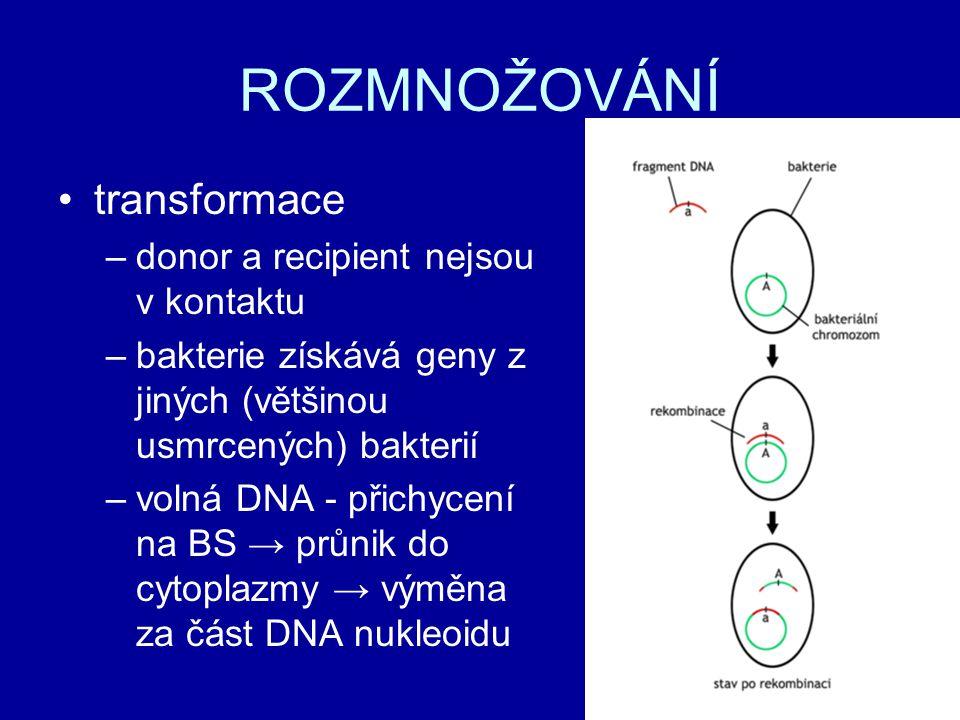 ROZMNOŽOVÁNÍ transformace donor a recipient nejsou v kontaktu