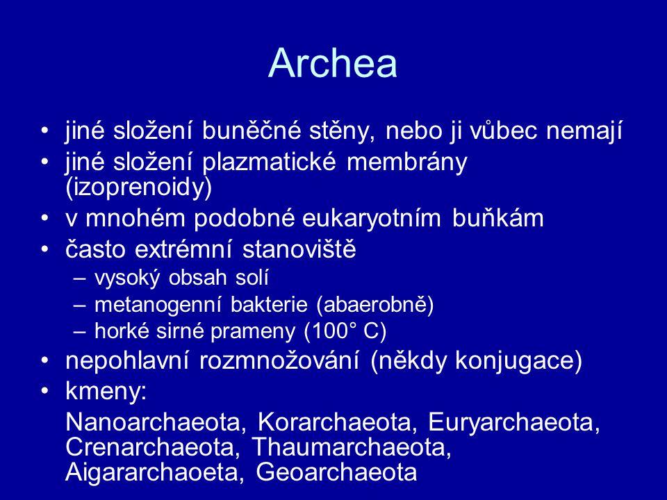Archea jiné složení buněčné stěny, nebo ji vůbec nemají