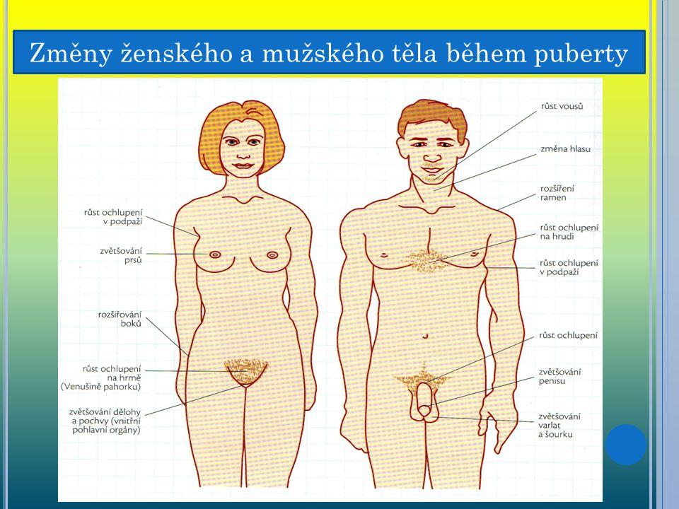 Změny ženského a mužského těla během puberty