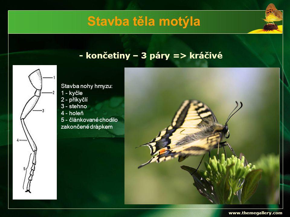 Stavba těla motýla - končetiny – 3 páry => kráčivé