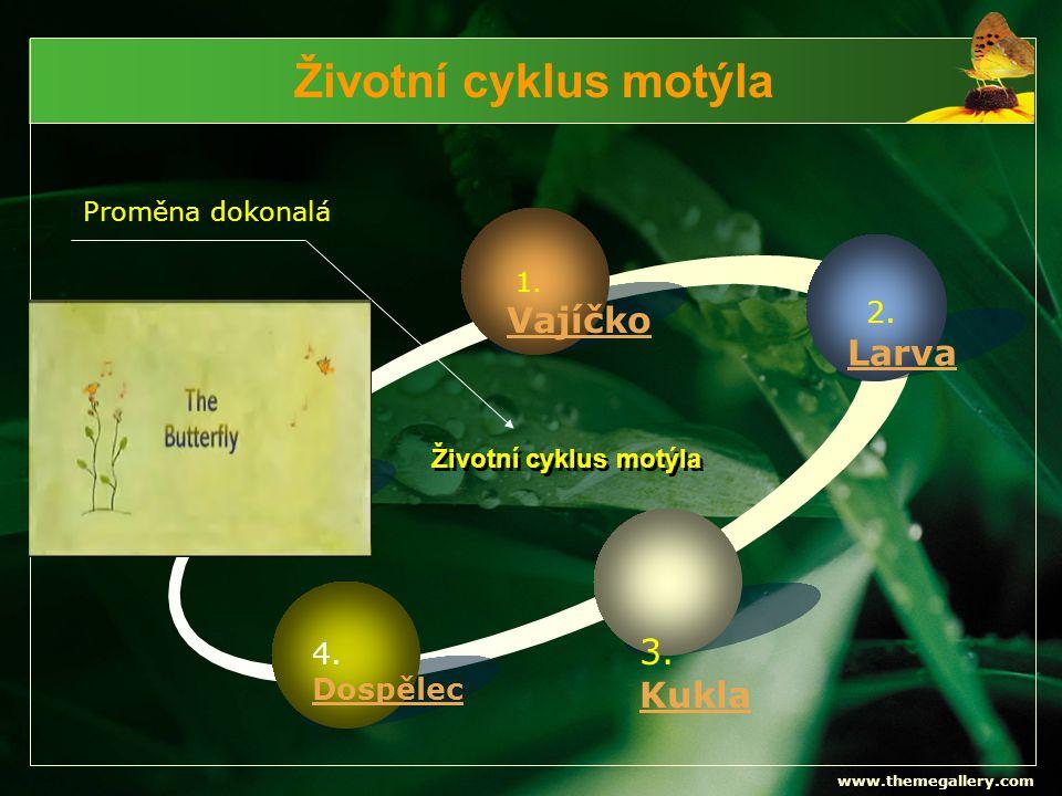Životní cyklus motýla Vajíčko Larva 3. Kukla 4. Dospělec