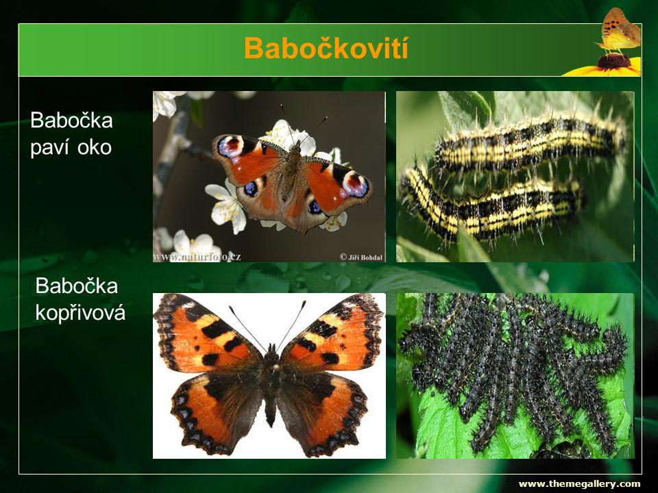 Babočkovití Babočka paví oko Babočka kopřivová www.themegallery.com