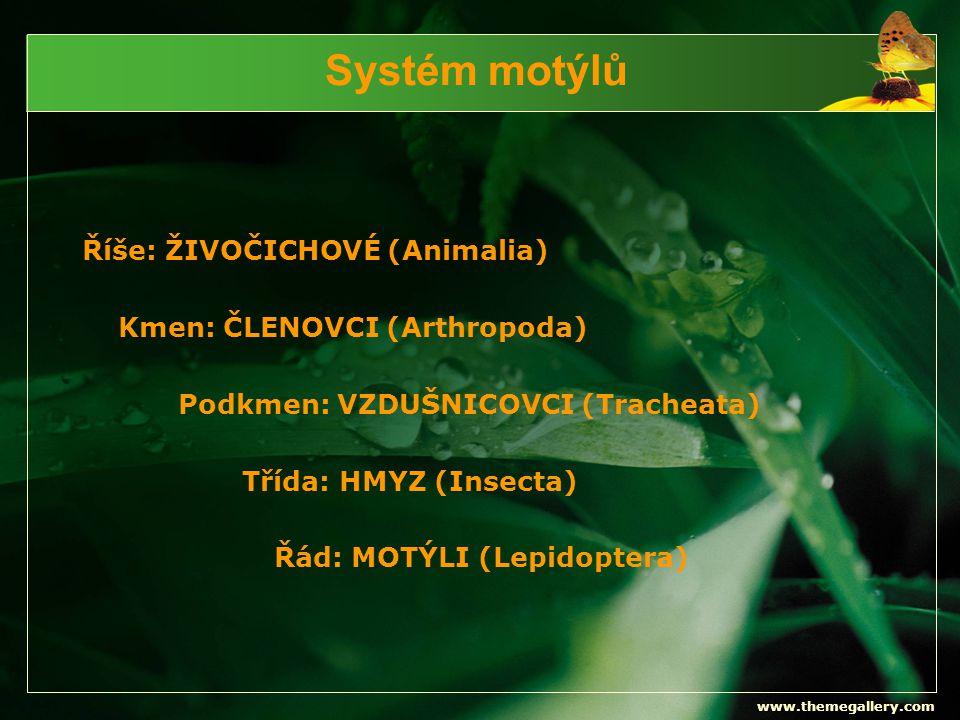 Systém motýlů Říše: ŽIVOČICHOVÉ (Animalia) Kmen: ČLENOVCI (Arthropoda)
