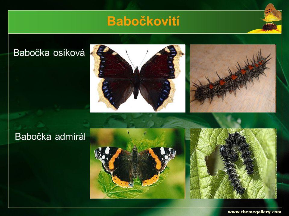Babočkovití Babočka osiková Babočka admirál www.themegallery.com