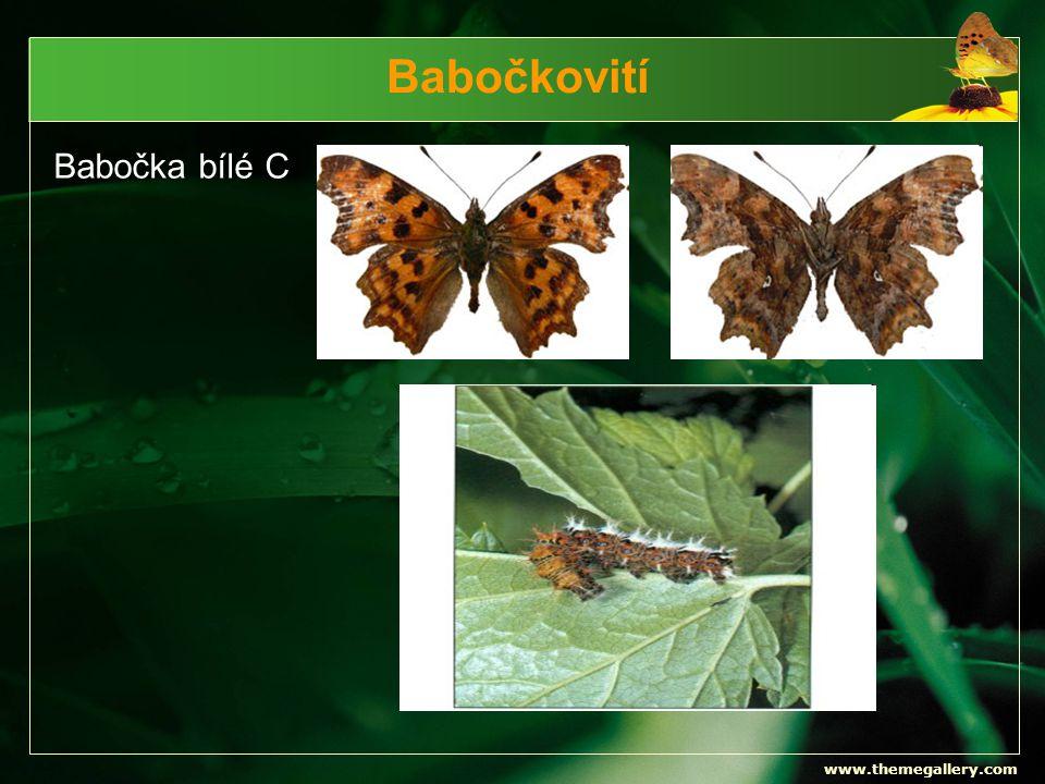 Babočkovití Babočka bílé C www.themegallery.com