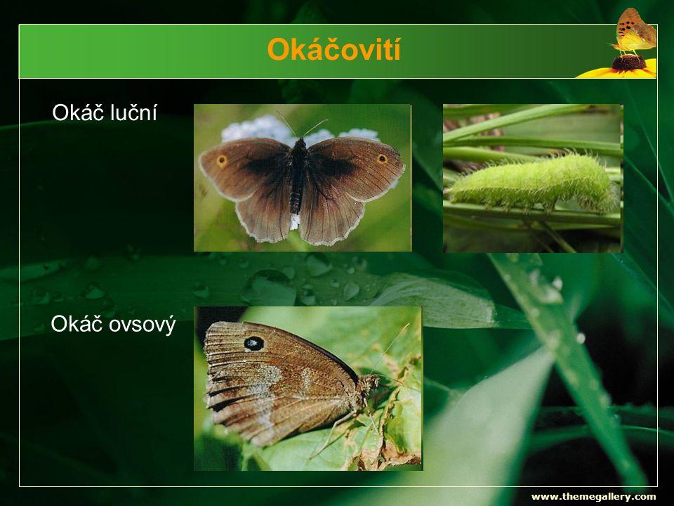 Okáčovití Okáč luční Okáč ovsový www.themegallery.com
