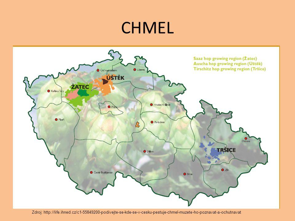 CHMEL Zdroj: http://life.ihned.cz/c1-55849200-podivejte-se-kde-se-v-cesku-pestuje-chmel-muzete-ho-poznavat-a-ochutnavat.