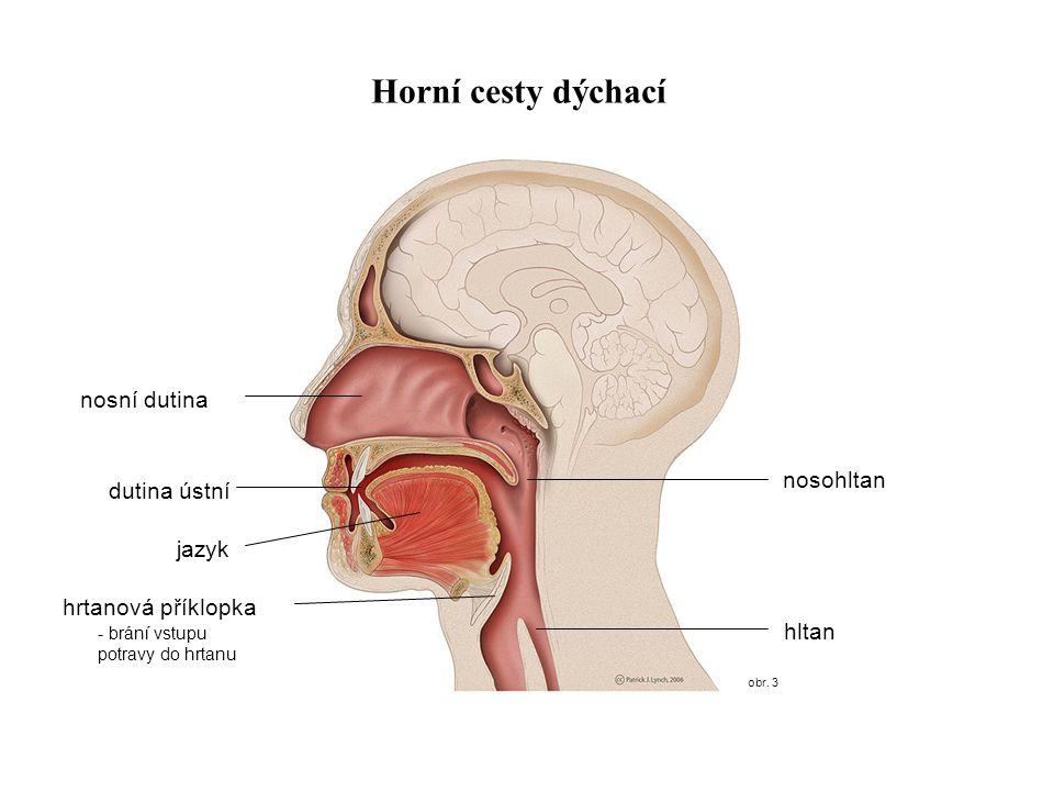 Horní cesty dýchací nosní dutina nosohltan dutina ústní jazyk