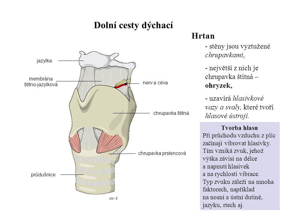 membrána štítno-jazylková