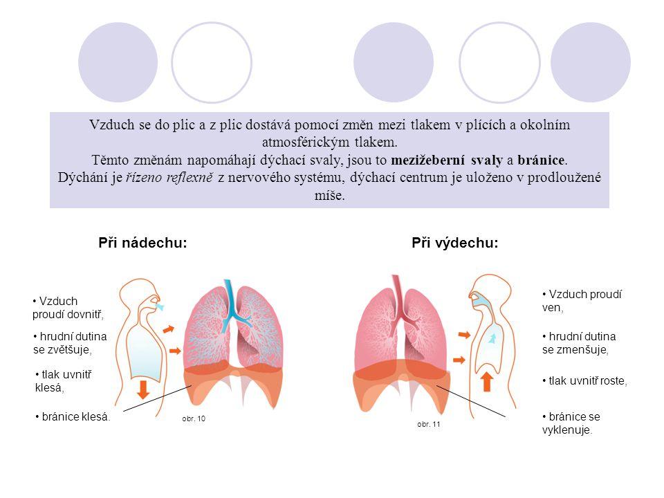 Vzduch se do plic a z plic dostává pomocí změn mezi tlakem v plících a okolním atmosférickým tlakem. Těmto změnám napomáhají dýchací svaly, jsou to mezižeberní svaly a bránice. Dýchání je řízeno reflexně z nervového systému, dýchací centrum je uloženo v prodloužené míše.