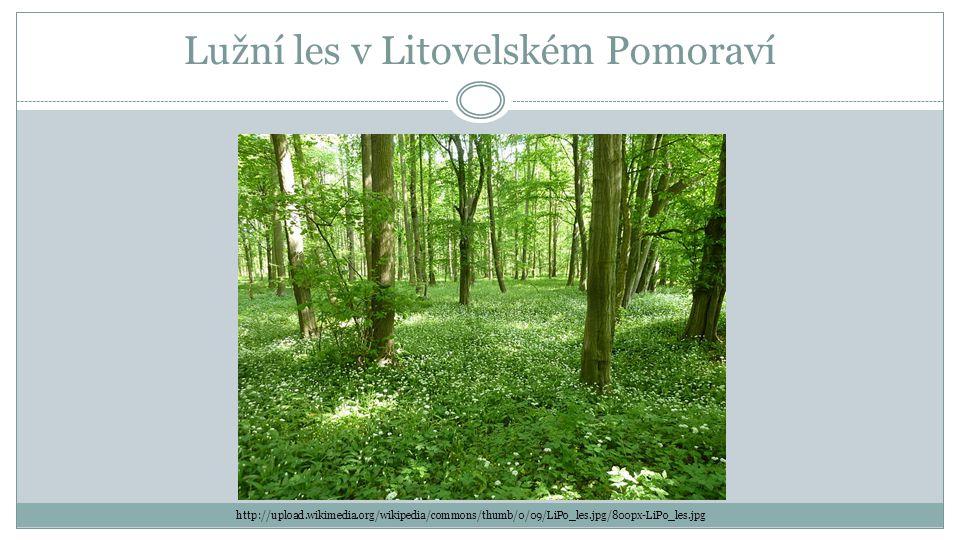 Lužní les v Litovelském Pomoraví