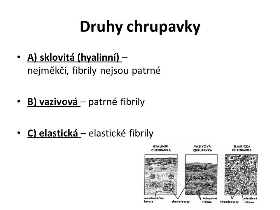 Druhy chrupavky A) sklovitá (hyalinní) – nejměkčí, fibrily nejsou patrné. B) vazivová – patrné fibrily.