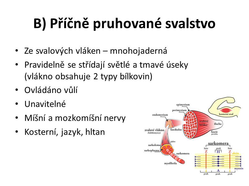 B) Příčně pruhované svalstvo