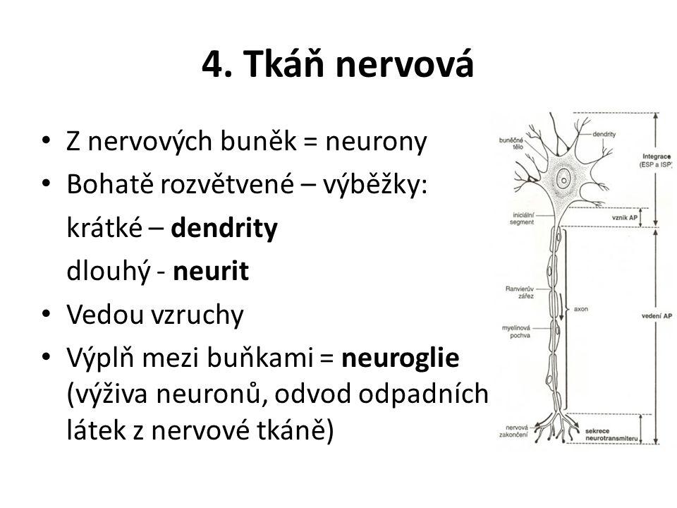4. Tkáň nervová Z nervových buněk = neurony
