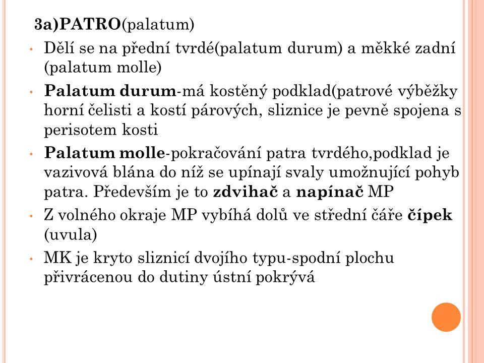 3a)PATRO(palatum) Dělí se na přední tvrdé(palatum durum) a měkké zadní (palatum molle)