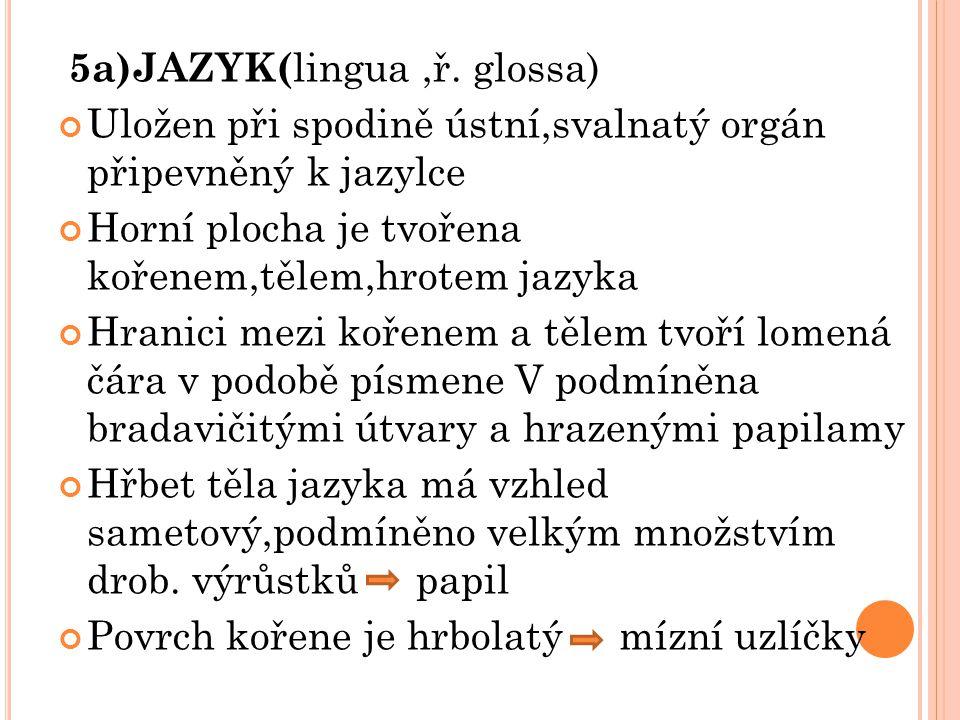 5a)JAZYK(lingua ,ř. glossa)