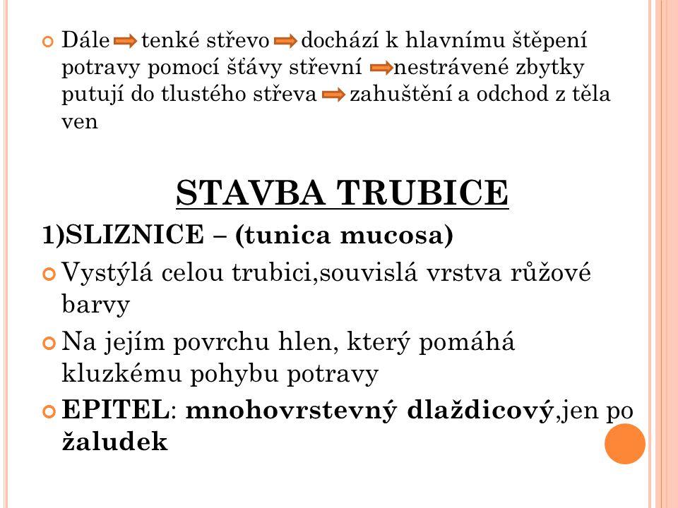1)SLIZNICE – (tunica mucosa)