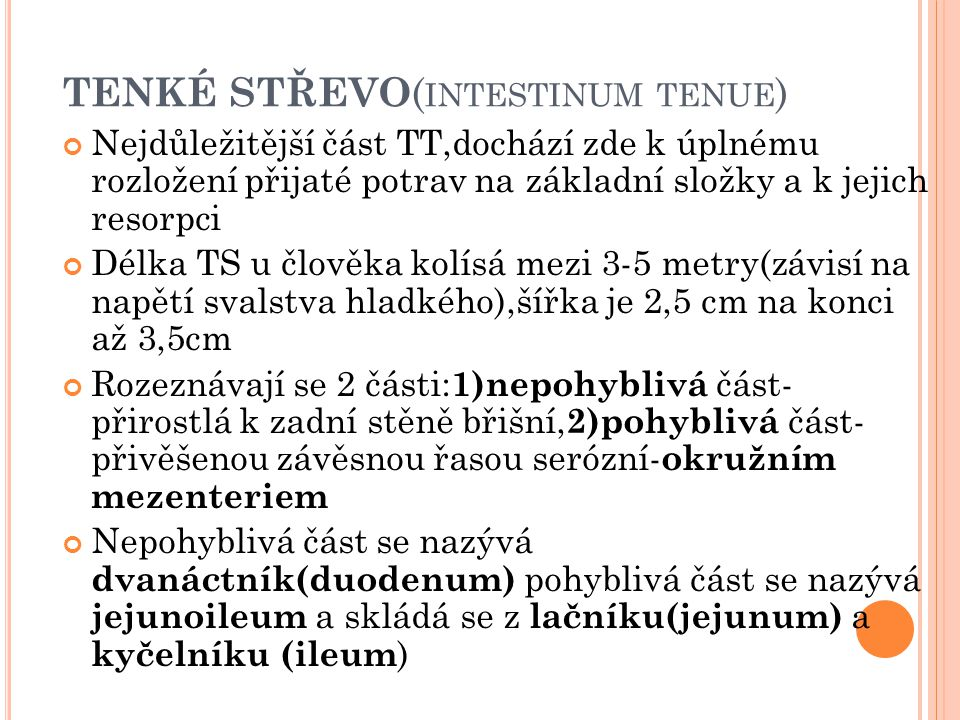 TENKÉ STŘEVO(intestinum tenue)
