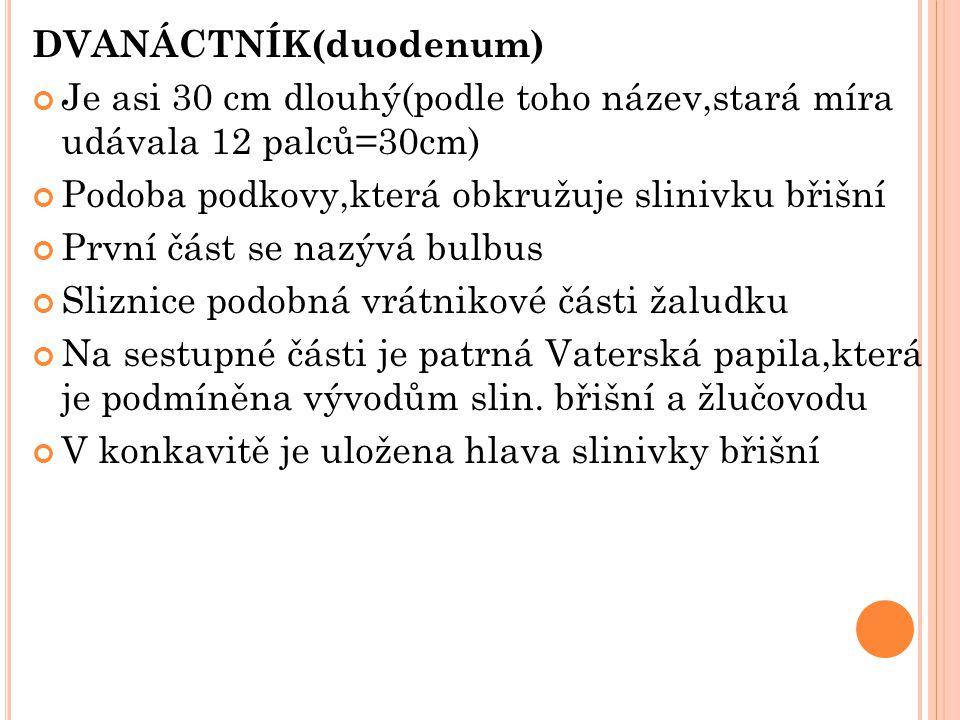 DVANÁCTNÍK(duodenum)