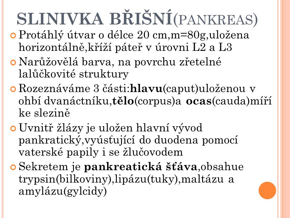 SLINIVKA BŘIŠNÍ(pankreas)