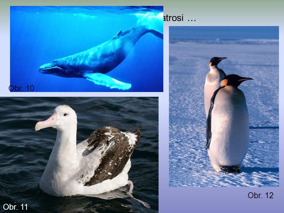 Živočichové: tučňáci, kytovci, albatrosi …