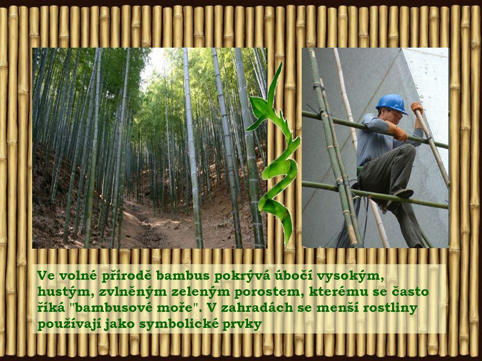 Ve volné přírodě bambus pokrývá úbočí vysokým, hustým, zvlněným zeleným porostem, kterému se často říká bambusové moře .