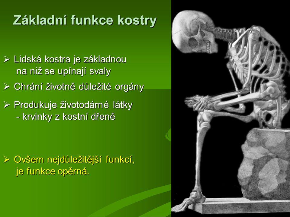 Základní funkce kostry