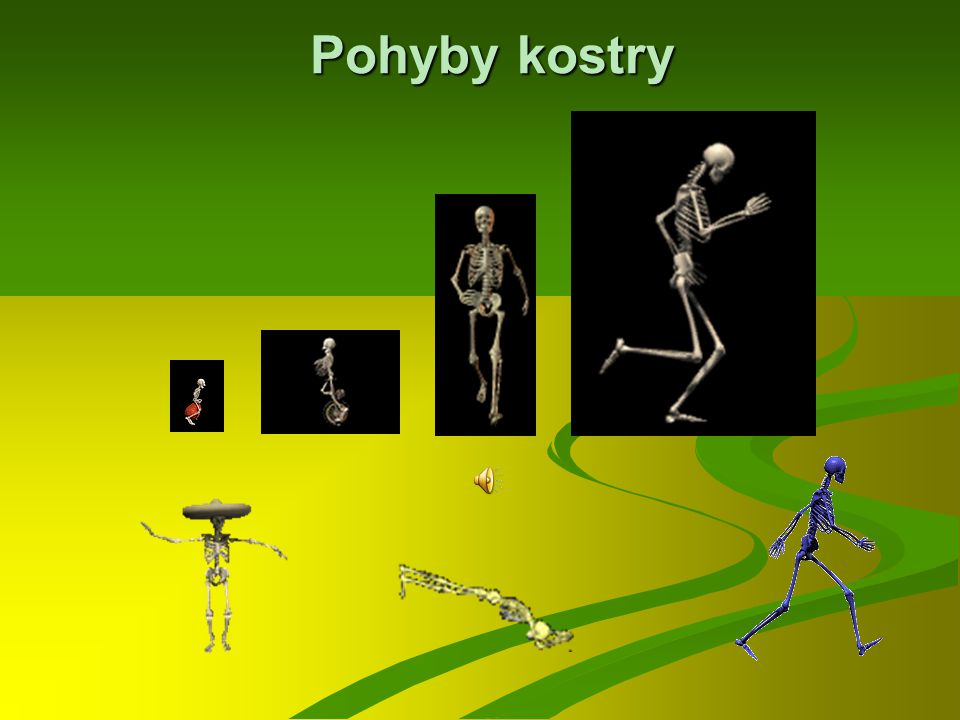 Pohyby kostry