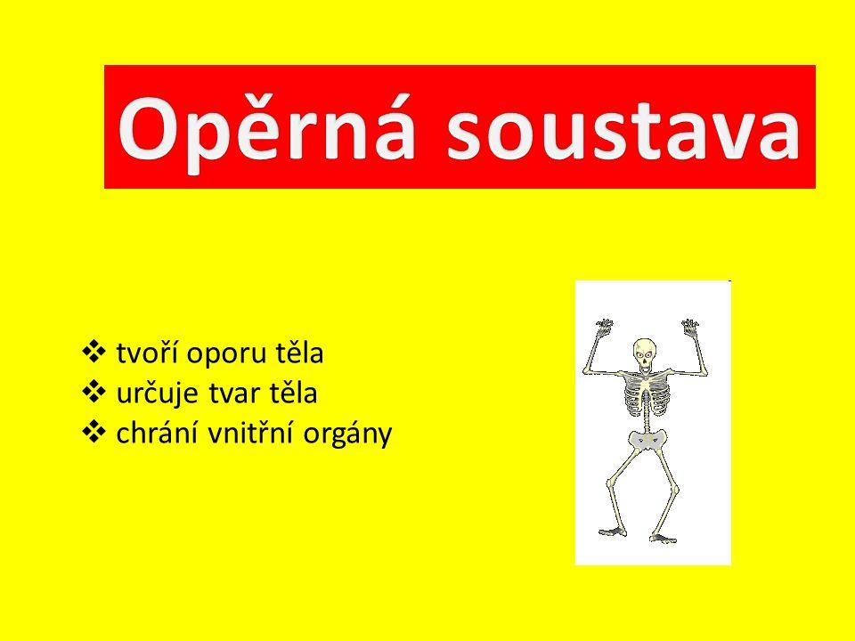 Opěrná soustava tvoří oporu těla určuje tvar těla