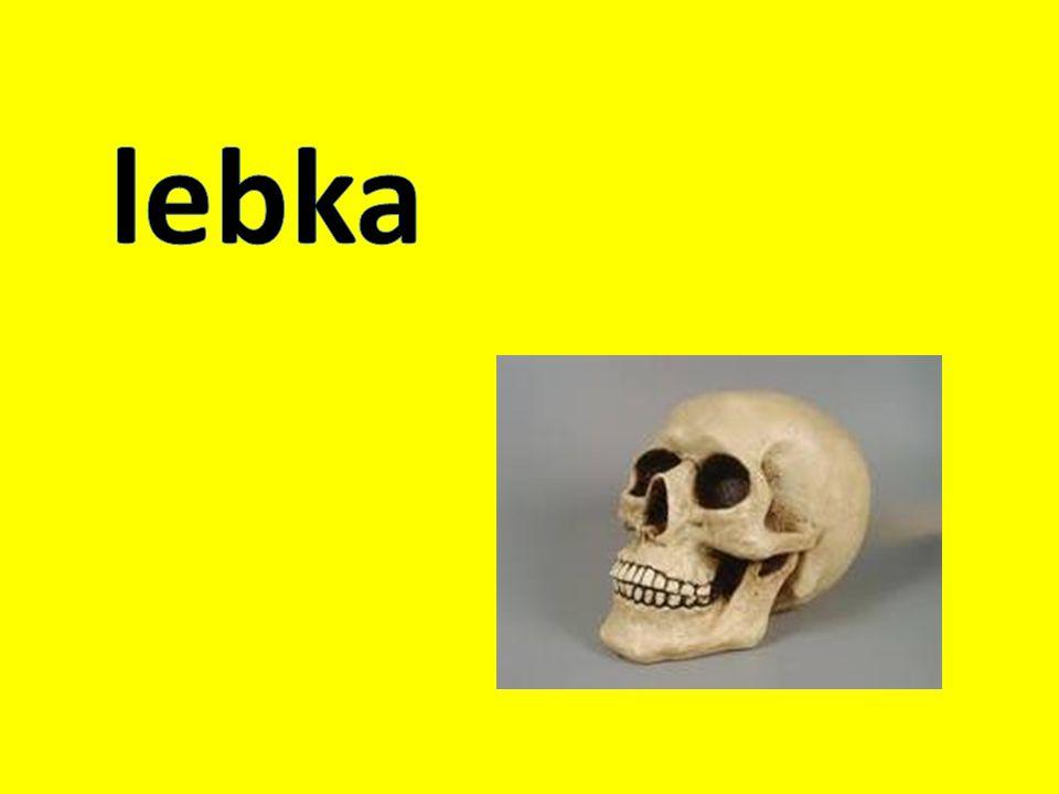 lebka