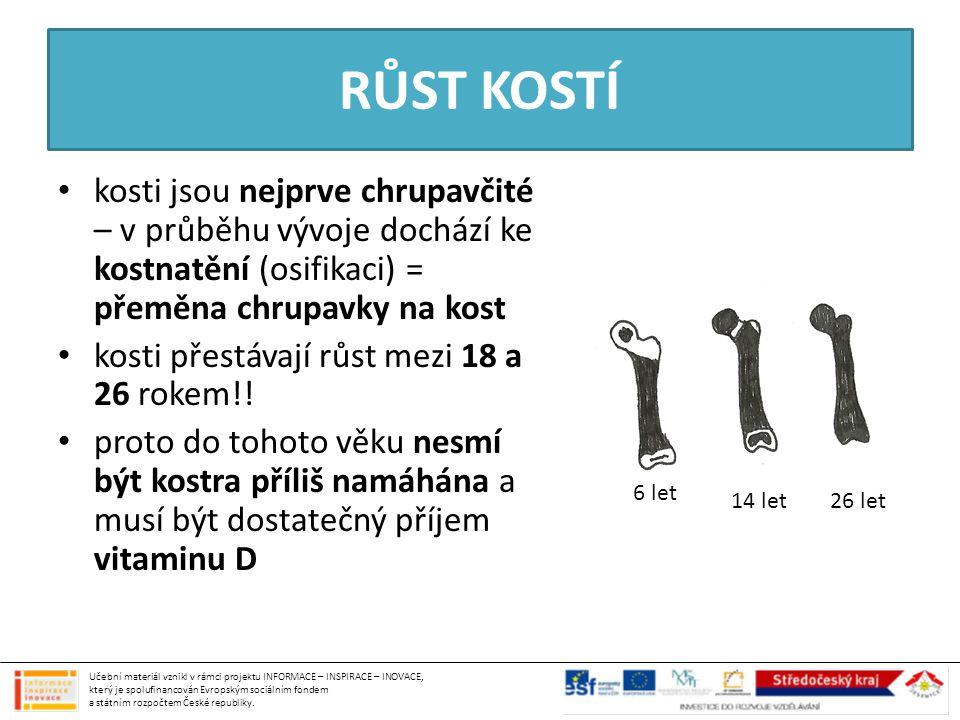 RŮST KOSTÍ kosti jsou nejprve chrupavčité – v průběhu vývoje dochází ke kostnatění (osifikaci) = přeměna chrupavky na kost.