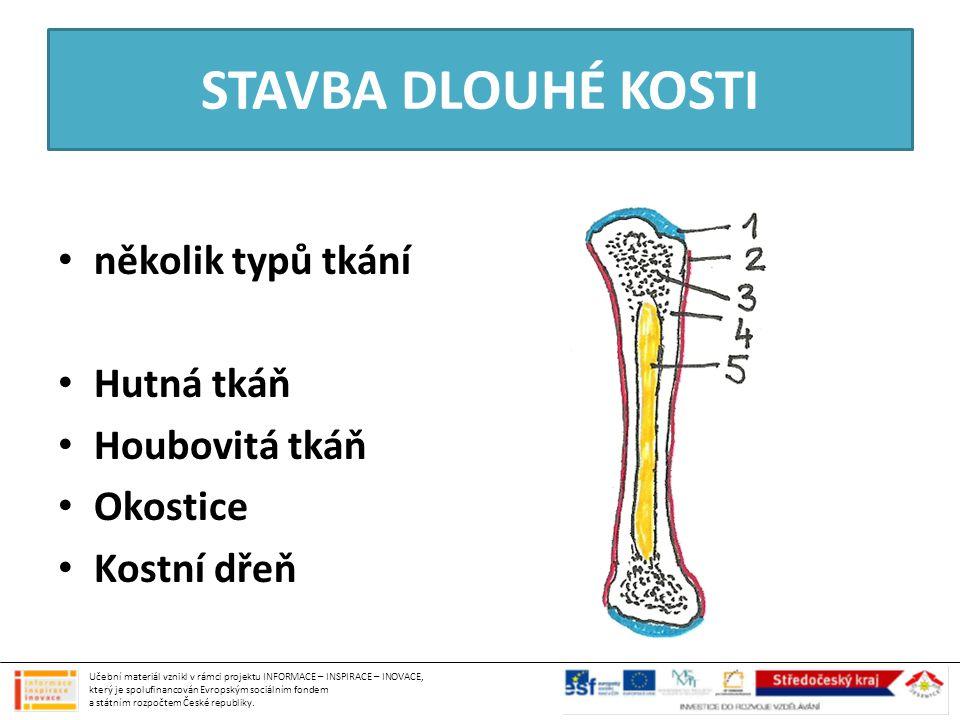 STAVBA DLOUHÉ KOSTI několik typů tkání Hutná tkáň Houbovitá tkáň