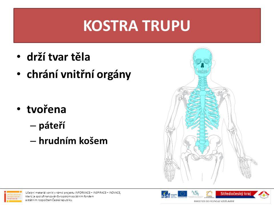 KOSTRA TRUPU drží tvar těla chrání vnitřní orgány tvořena páteří