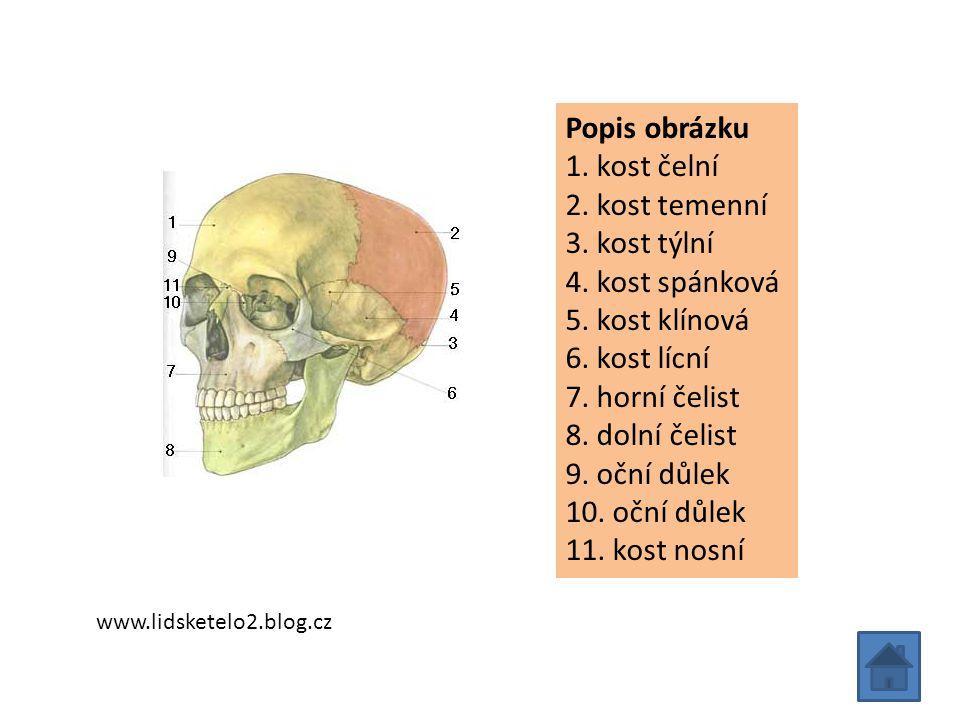 Popis obrázku 1. kost čelní 2. kost temenní 3. kost týlní