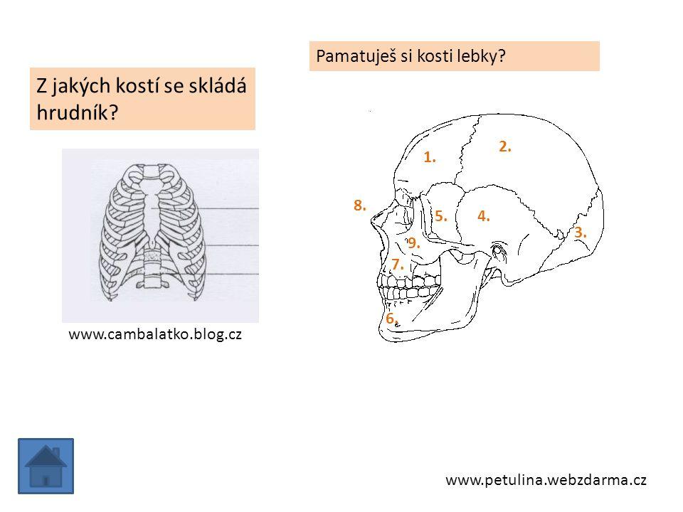 Z jakých kostí se skládá hrudník
