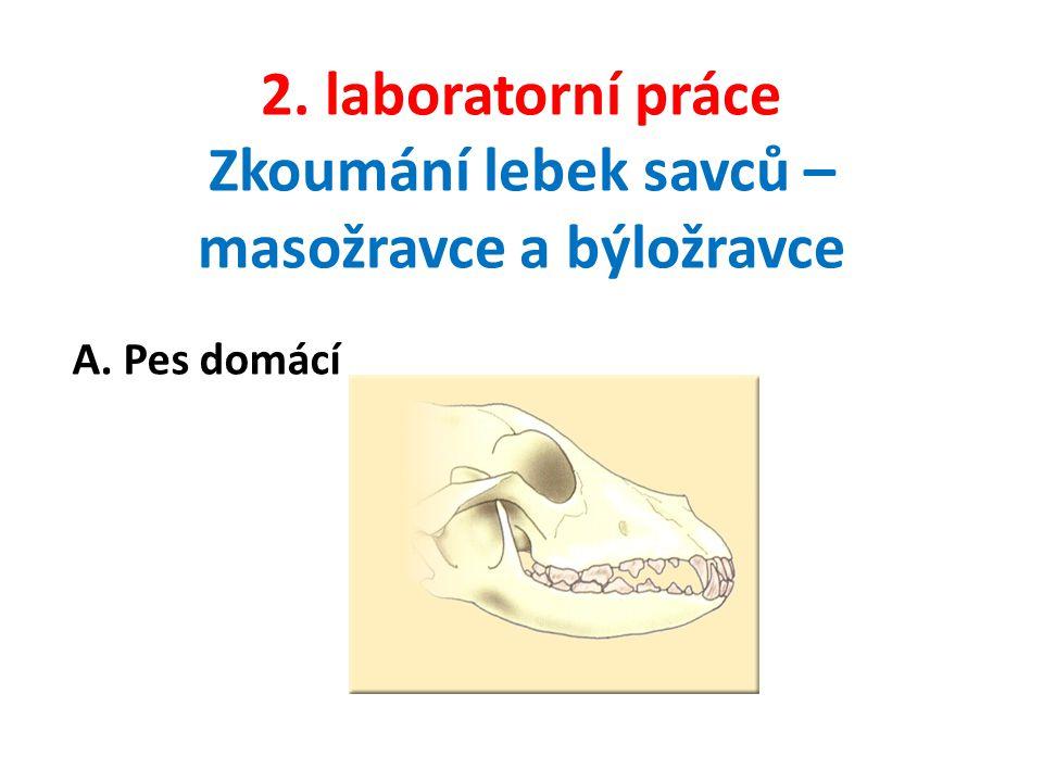 2. laboratorní práce Zkoumání lebek savců – masožravce a býložravce